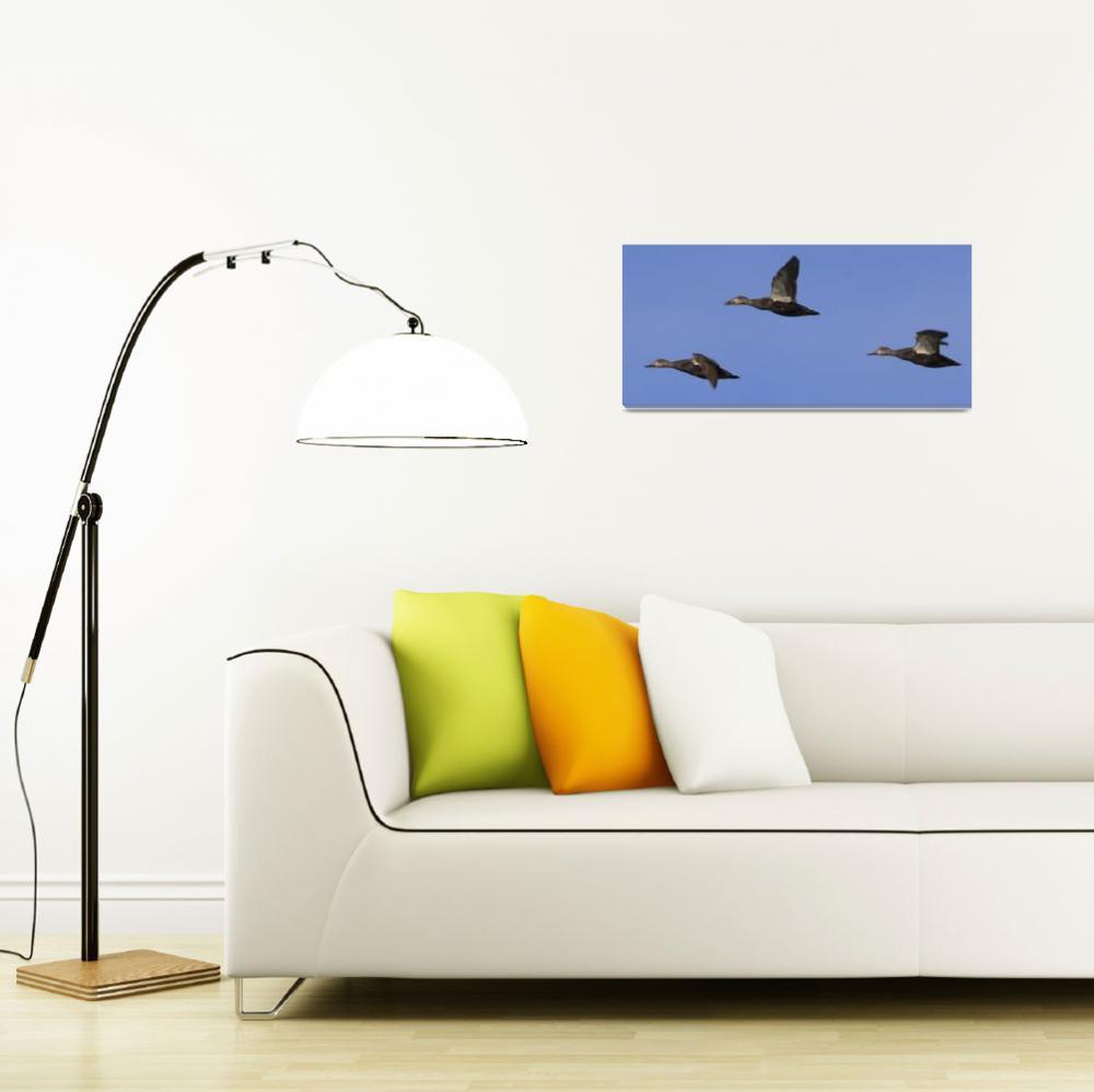 """Ducks in a Row""  (2009) by Black_White_Photos"
