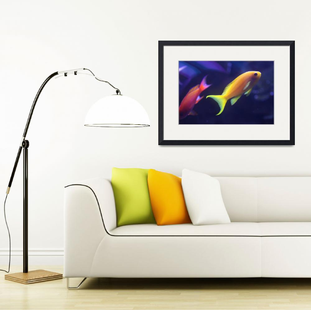 """""""Yellow and Pink Fish&quot  (2014) by DonnaCorless"""