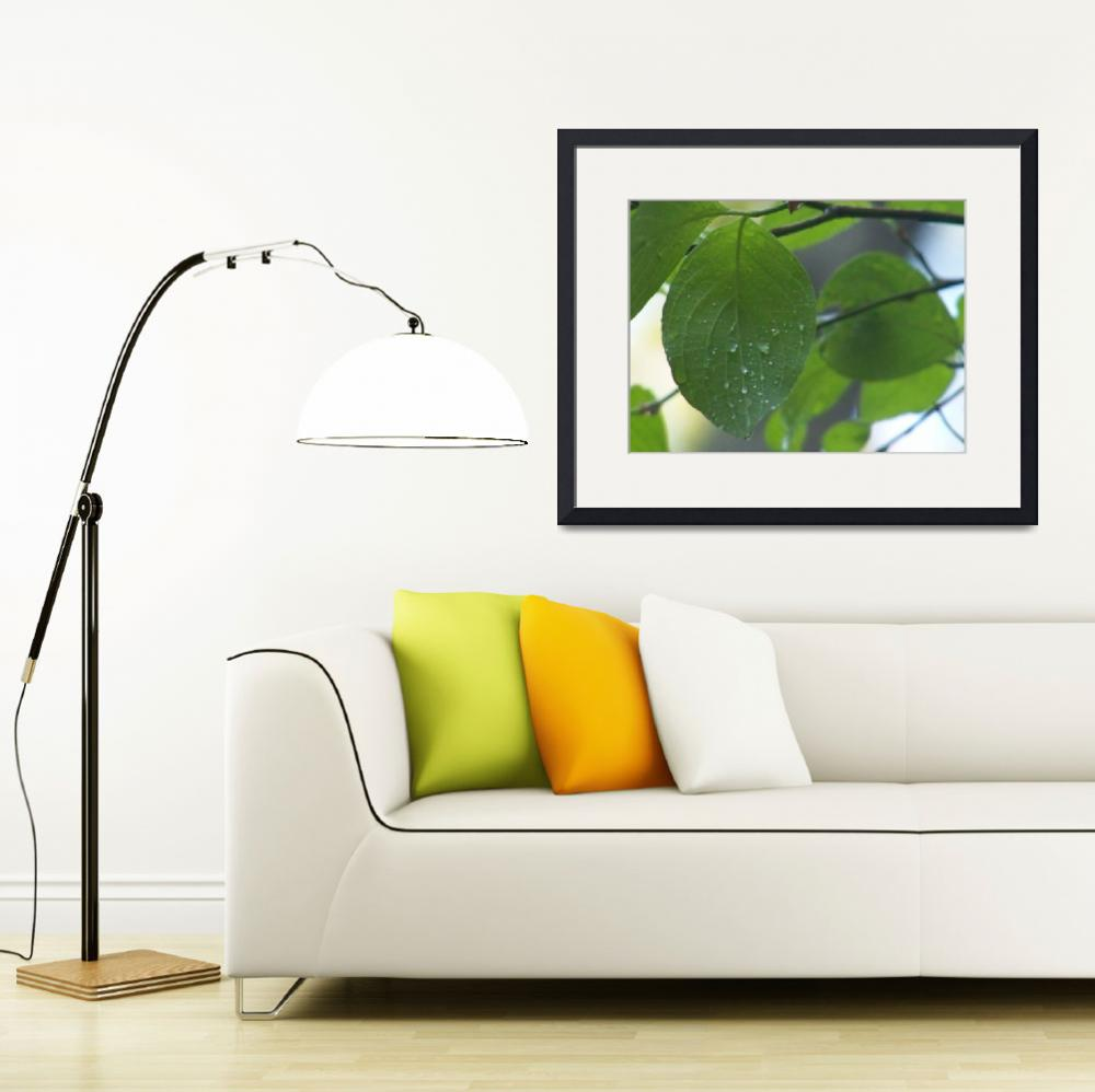 """""""A leaf with water drops&quot  (2008) by Ultra_Art"""