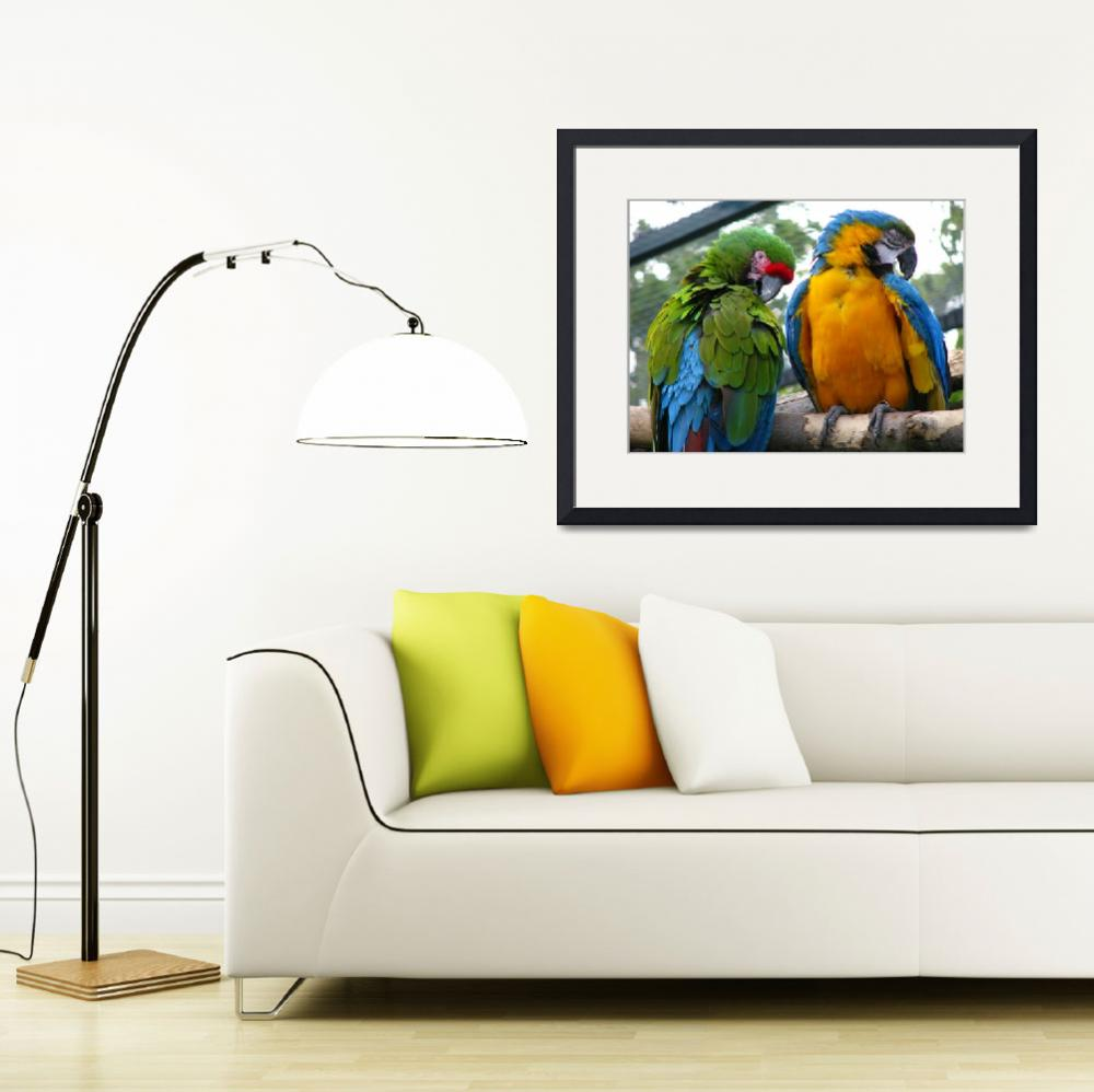 """""""Macaws&quot  (2008) by Gazographer"""