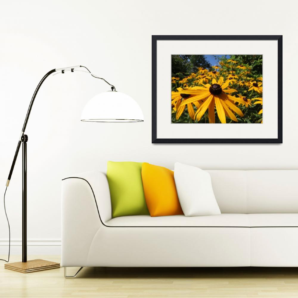 """Brown Eyed Susan_4460&quot  by davies"