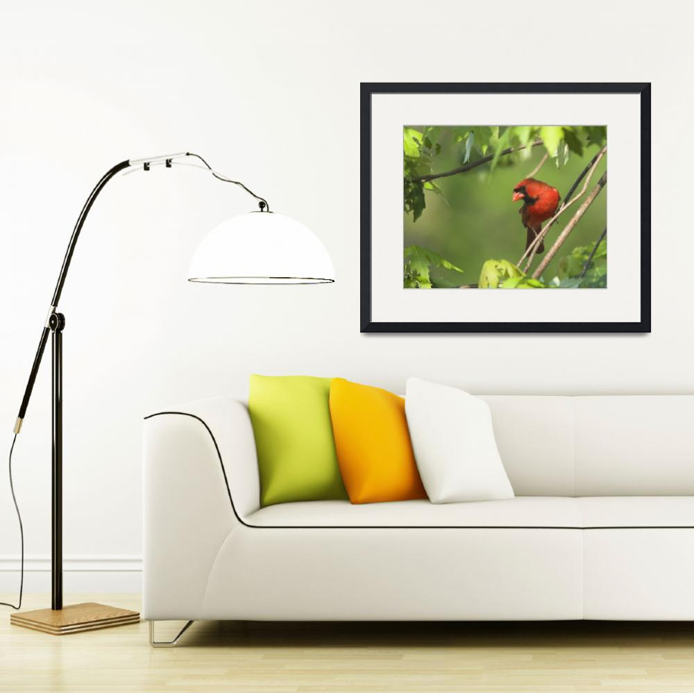 """""""Northern Cardinal Watching from the Tree Limb&quot  by tricia"""