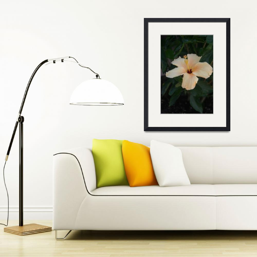 """""""Single Cream Colored Hibiscus Blossom&quot  (2009) by imaginativeimagery"""