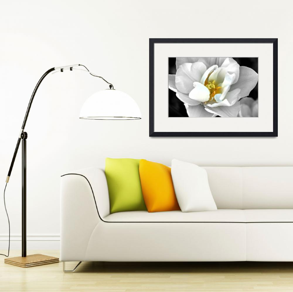 """""""White tulip&quot  (2012) by citrons"""