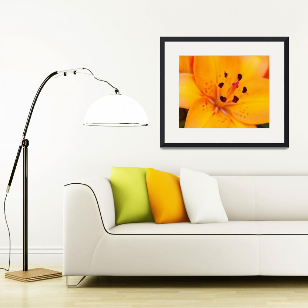 """""""Lily&quot  (2008) by cre8ivepix"""