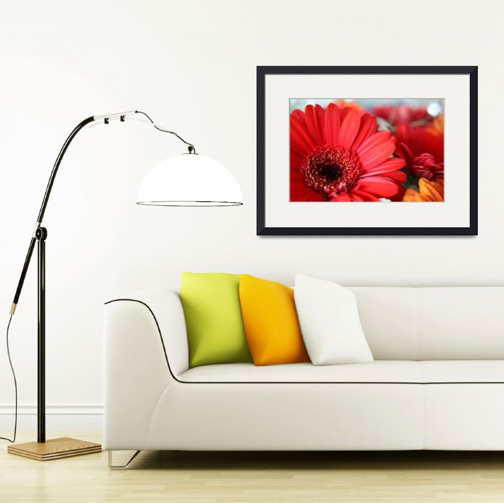 """""""Gerbera Flowers&quot  by cheryl-leighphotography"""