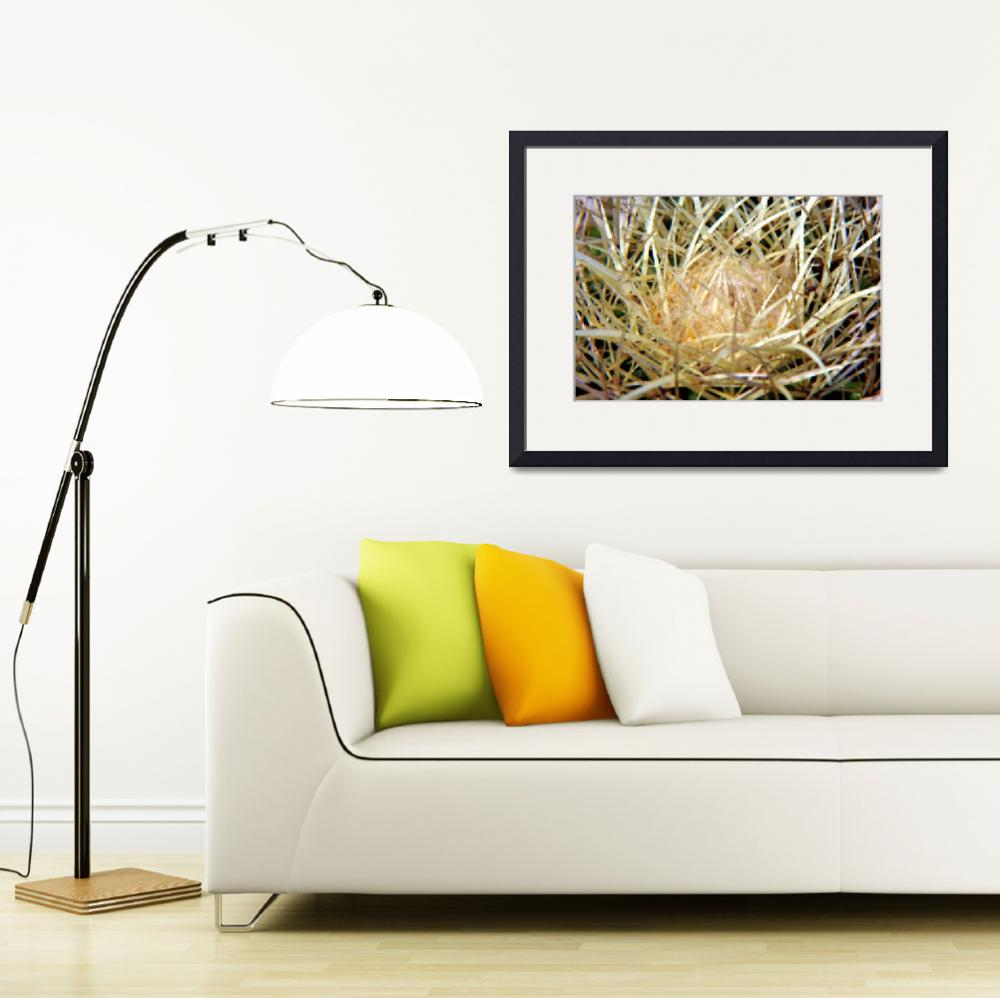 """Barrel Cactus&quot  (2009) by RTMacGowan"