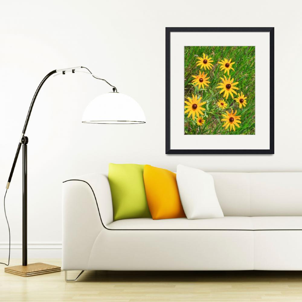 """Black-eyed susans by the roadside""  (2010) by kcmodb"