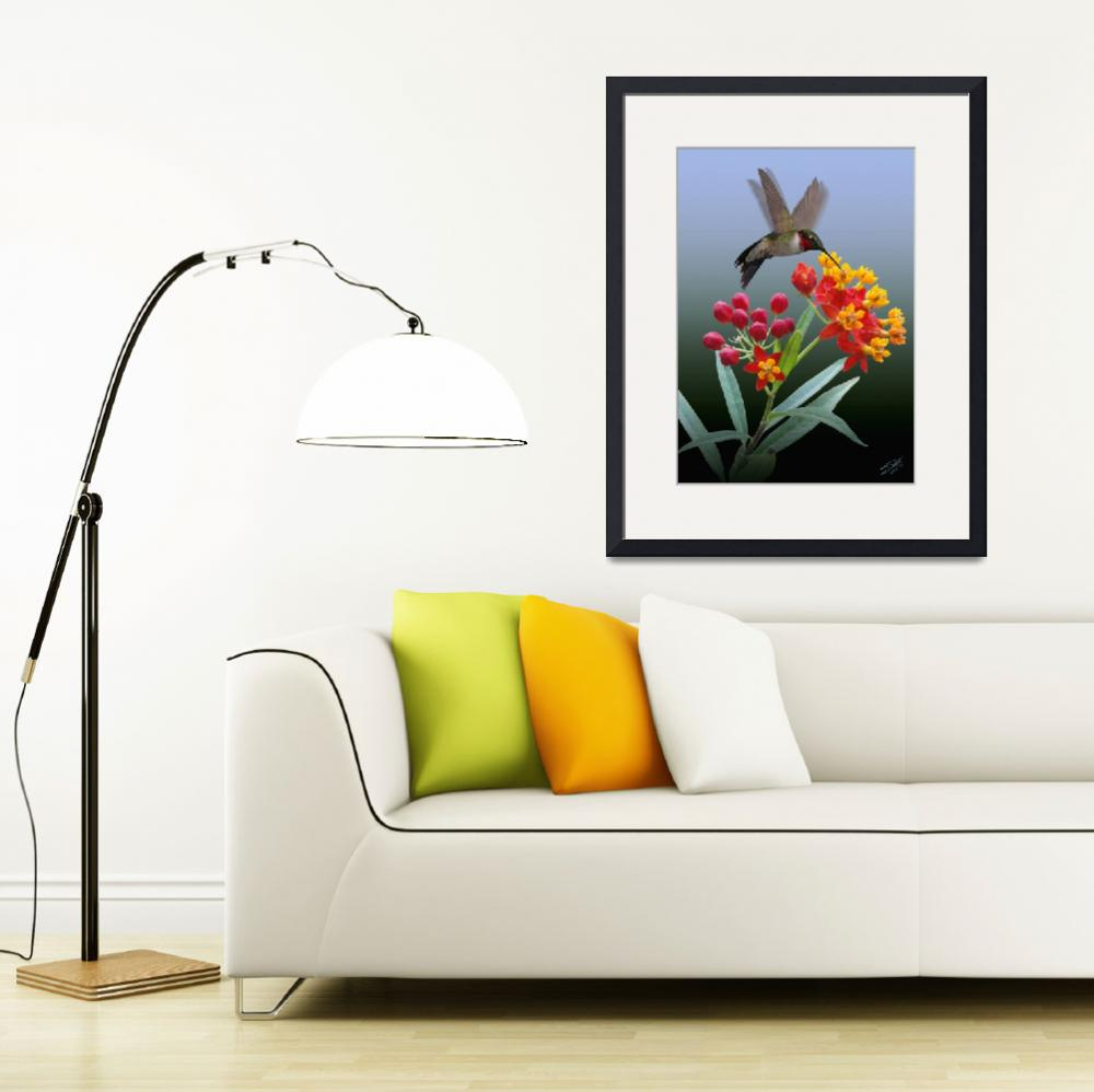 """""""Hummingbird and Mexican Butterfly Weed&quot  (2014) by spadecaller"""