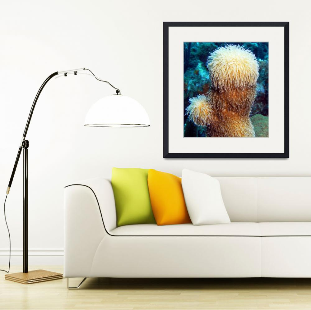 """""""Corky Sea Finger Coral Sponge feeding on Current&quot  (2012) by scubagirlamy"""