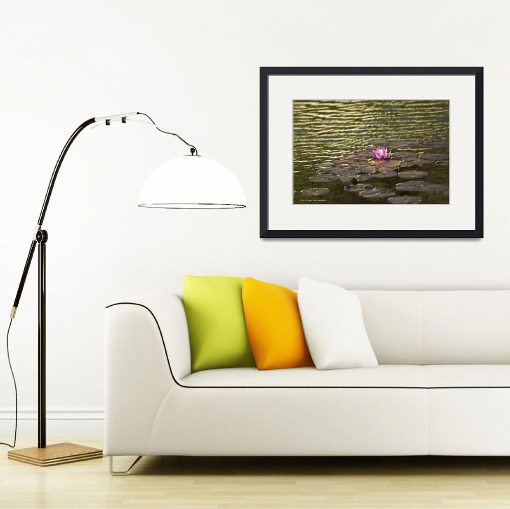 """""""Lily Pad Flower 5&quot  (2012) by robnelmsphotography"""