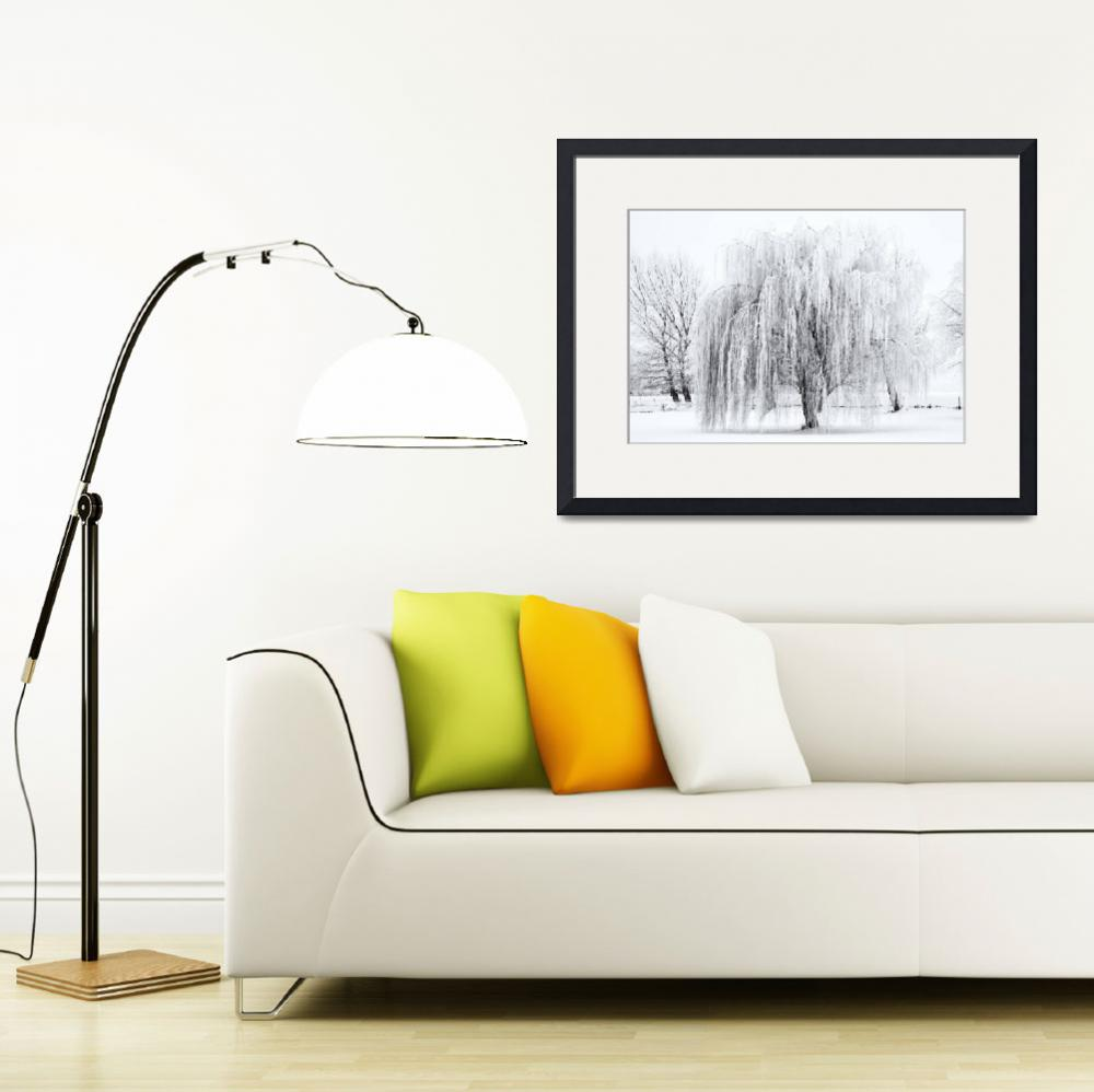 """""""Winter Willow&quot  (2012) by Dawsonimages"""