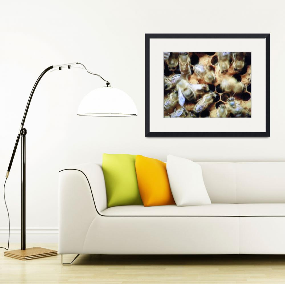 """""""BEES on HDTV""""  (2010) by loopstreet"""