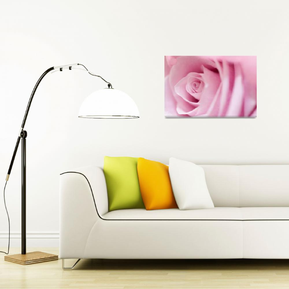 """Pink Rose""  (2011) by ArgosDesigns"