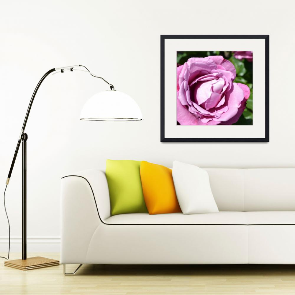 """""""Pink Rose&quot  (2011) by PatriciaSanders"""