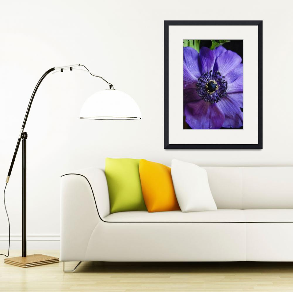 """""""purple flower&quot  (2009) by nyc-naturephoto"""