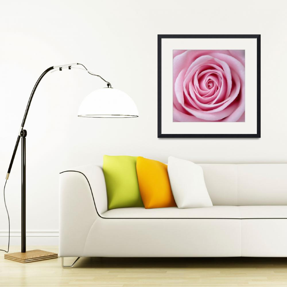 """rose spiral&quot  by jamesgalpin"