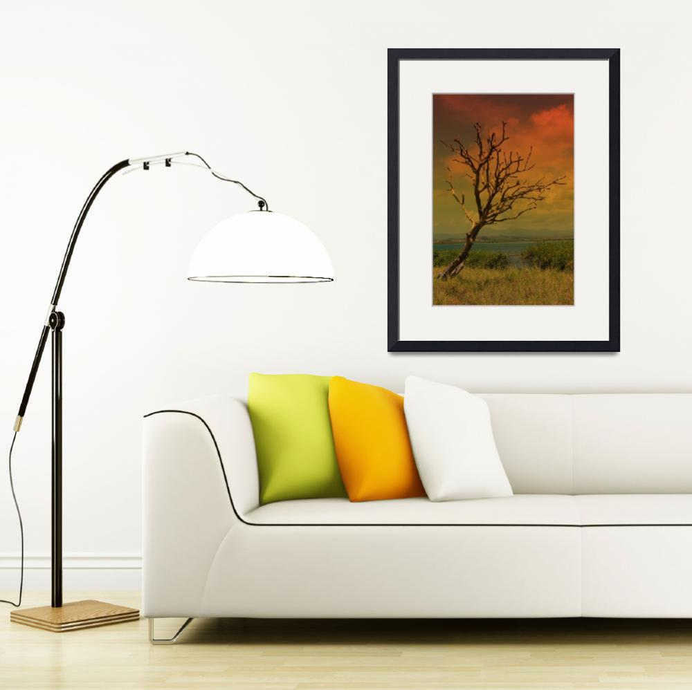 """""""Sunset Tree&quot  (2011) by picsbytiff"""