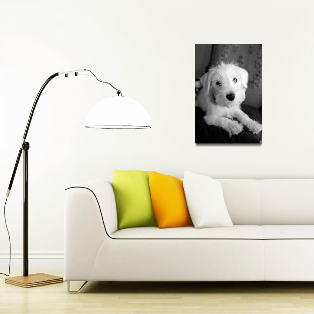 """Puppy on Pillow""  (2014) by dawnmmanser"