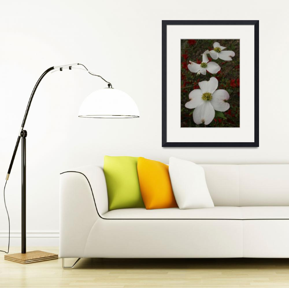 """""""3 Dogwood Blossoms - Vertical&quot  by Weingartner"""