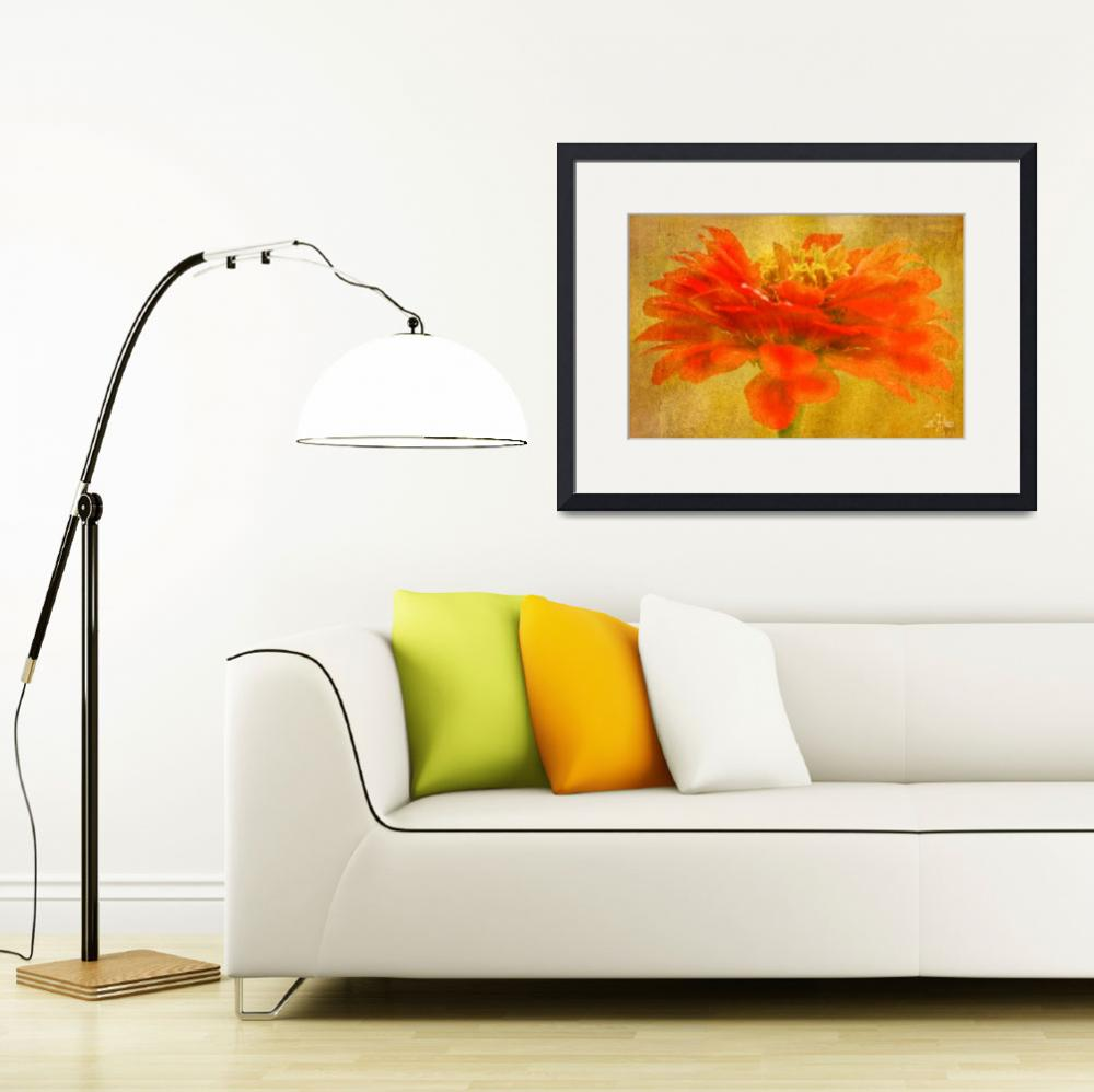 """""""Zinnia Red Orange Color Floral Wall Art""""  (2013) by PhotographsByCarolFAustin"""