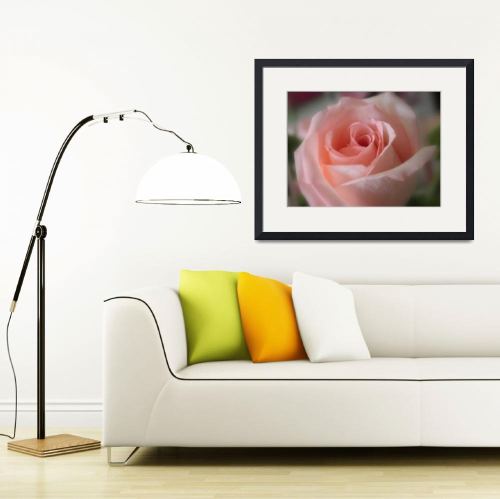 """""""Delicate Pink Rose&quot  by Groecar"""