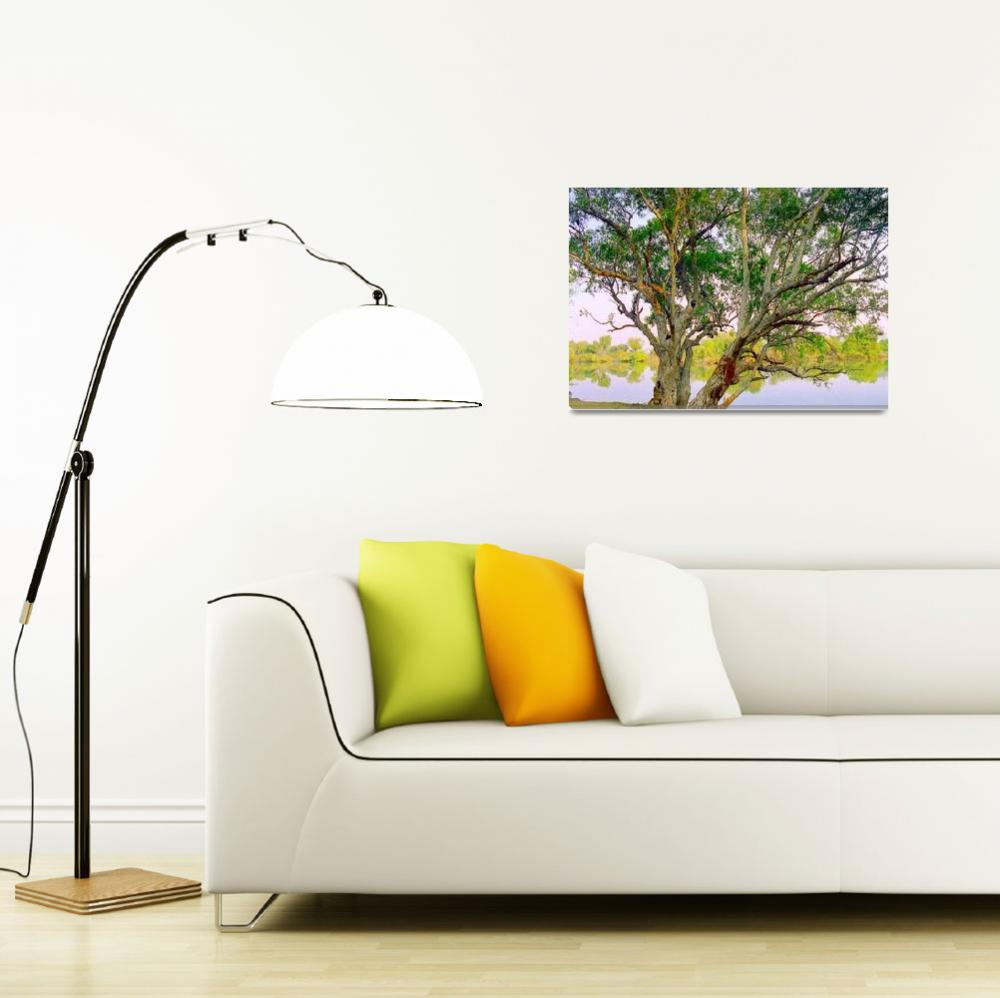 """""""Tree by Zambezi River, Zambia - Africa""""  (2011) by biriart"""