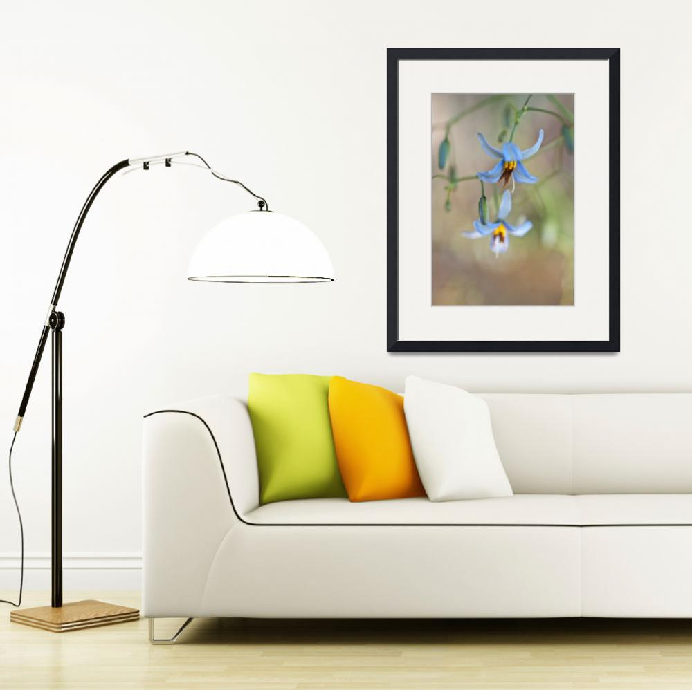 """""""Dianella Flowers in the Wild, 3&quot  (2009) by HughCampbell"""
