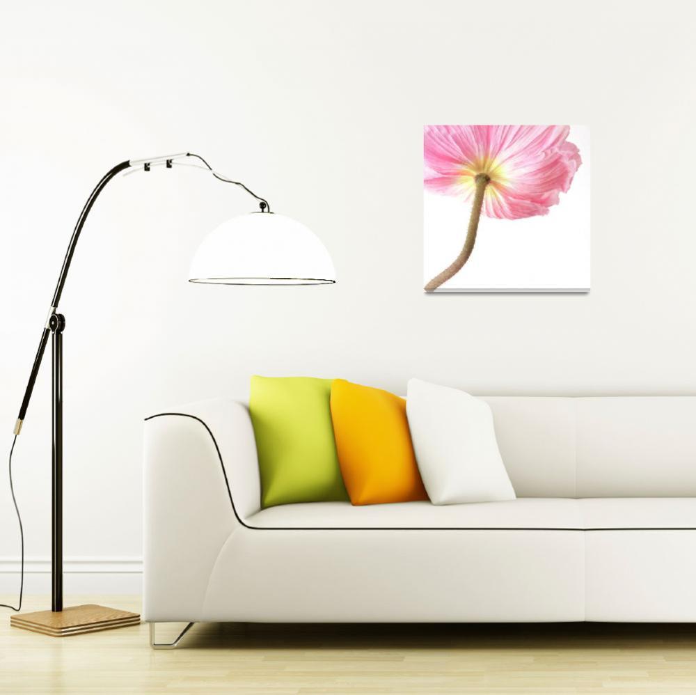 """pink poppy""  (2011) by Piri"