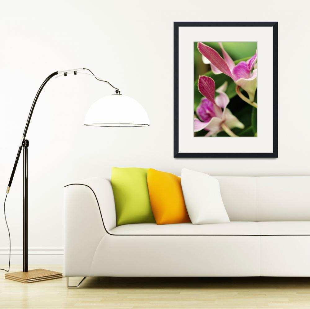 """Purple Orchids Among Green Leaves&quot  by DesignPics"