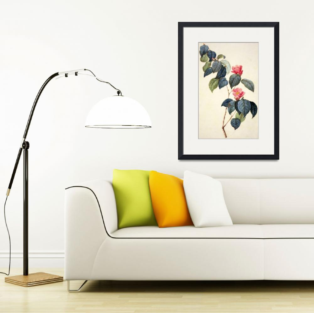 """""""Camellia Japonica""""  by fineartmasters"""