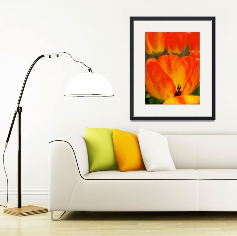 """Colorful Spring Tulip&quot  (2015) by vpicks"