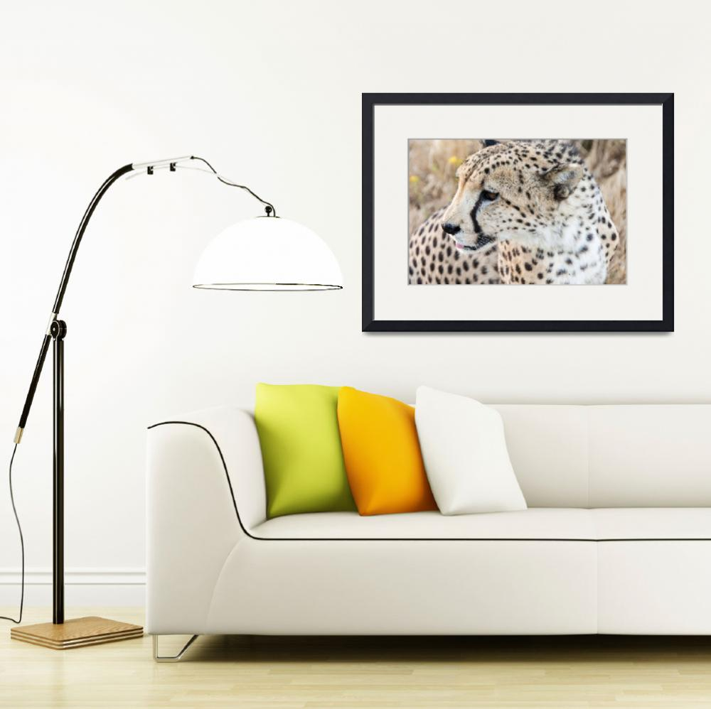 """631 Art Big Cat Framed Photo&quot  by eddiealfaro"
