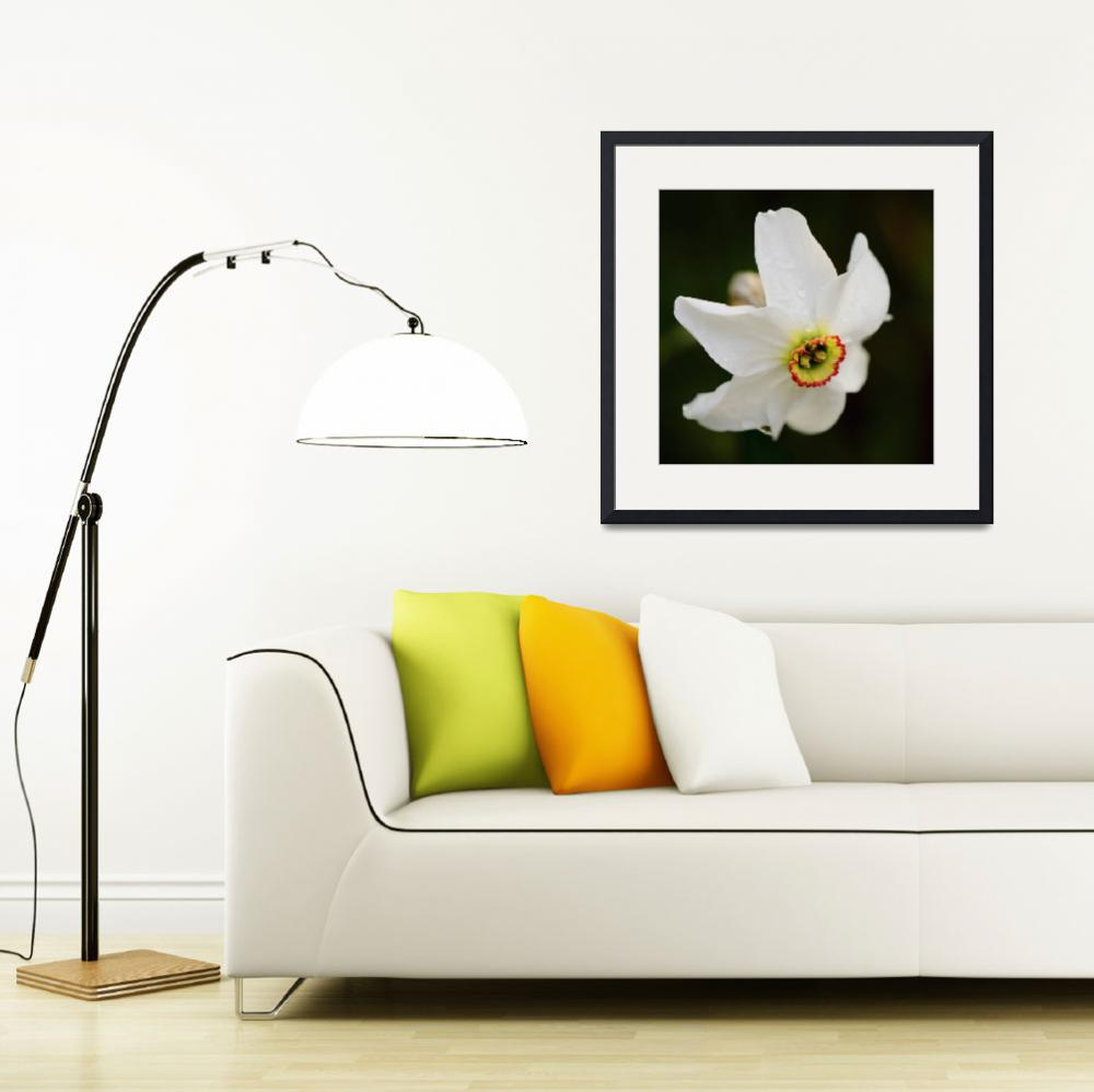 """White Daffodil After The Rain&quot  (2012) by DigitalBotanicals"