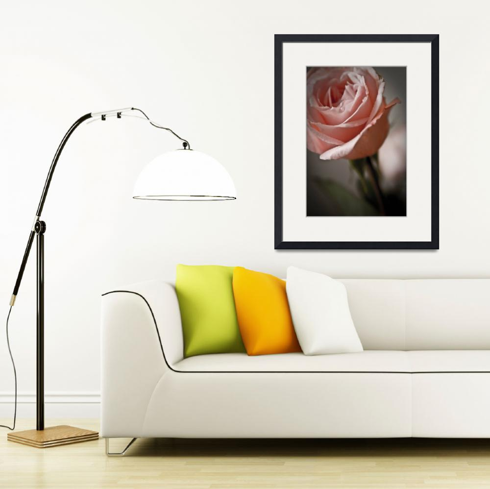 """""""Rose""""  (2009) by paco"""