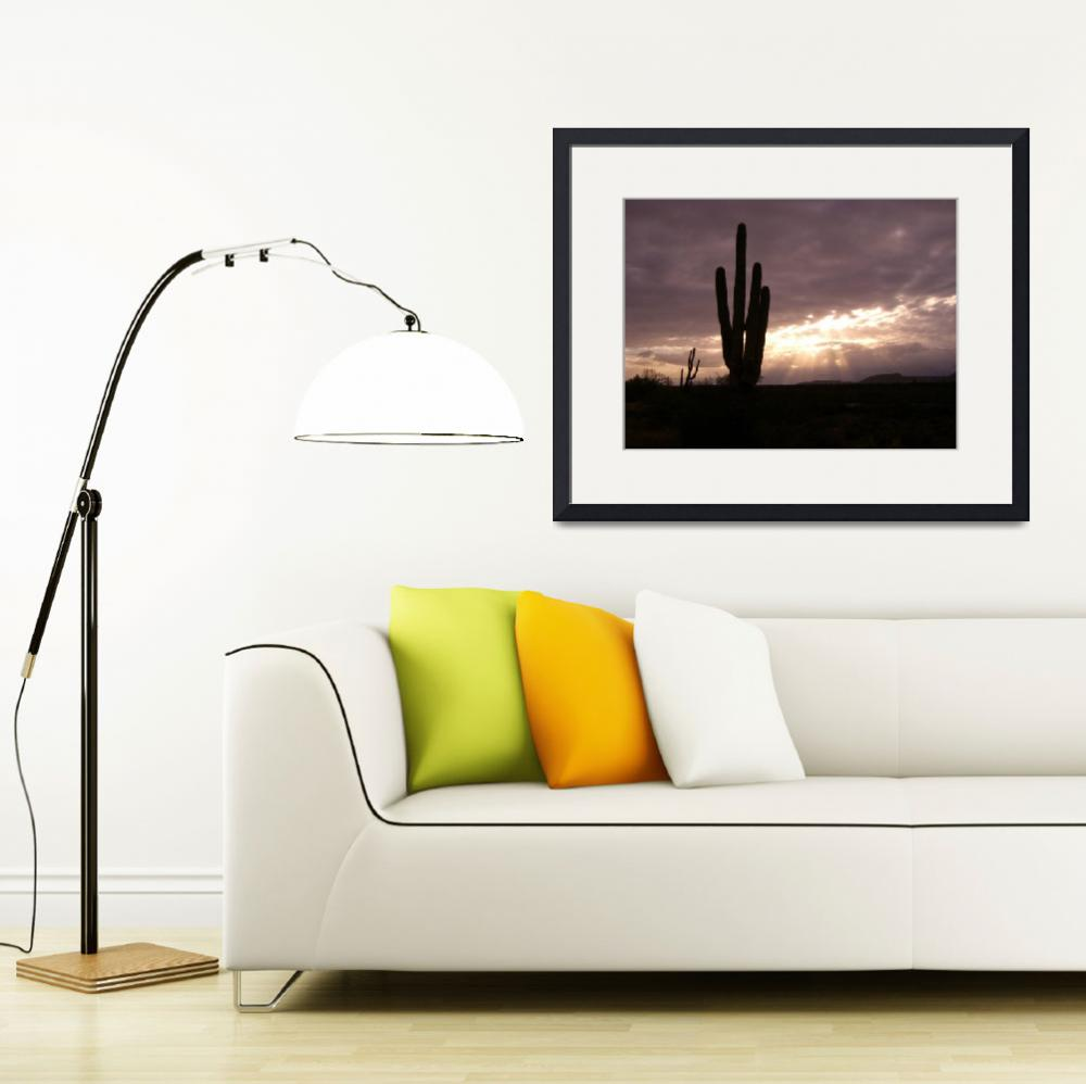 """""""Sun Rays on Saguaro&quot  (2012) by ethought"""