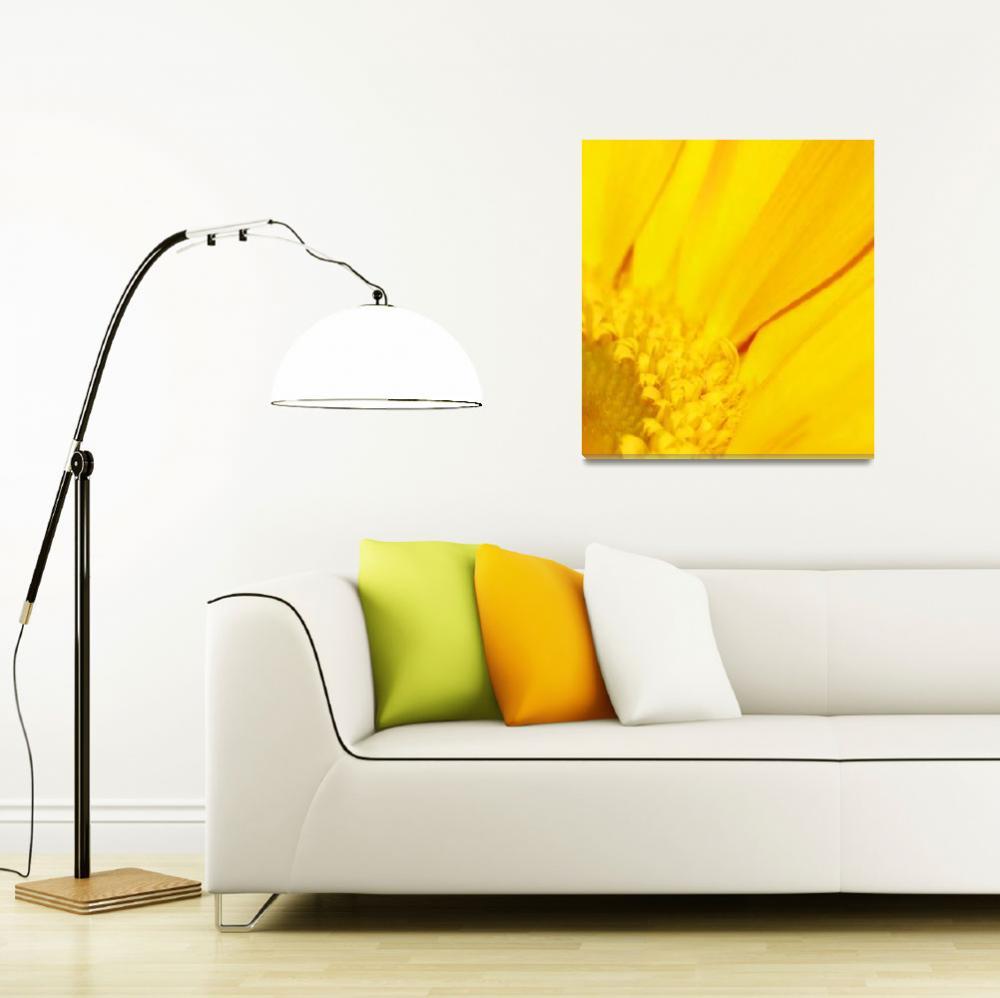 """Golden Gerbera""  (2009) by rayjacque"