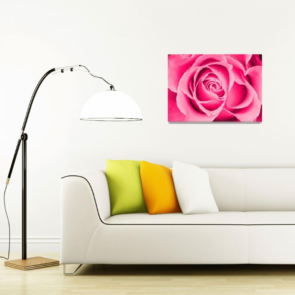 """""""Pink rose""""  by Piotr_Marcinski"""
