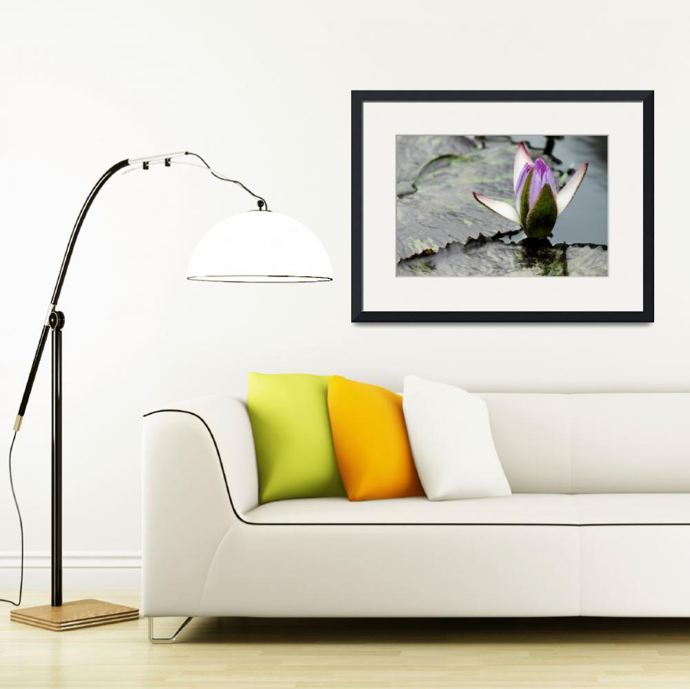 """""""Pink Water Lily Whispers""""  (2011) by PhotographsByCarolFAustin"""