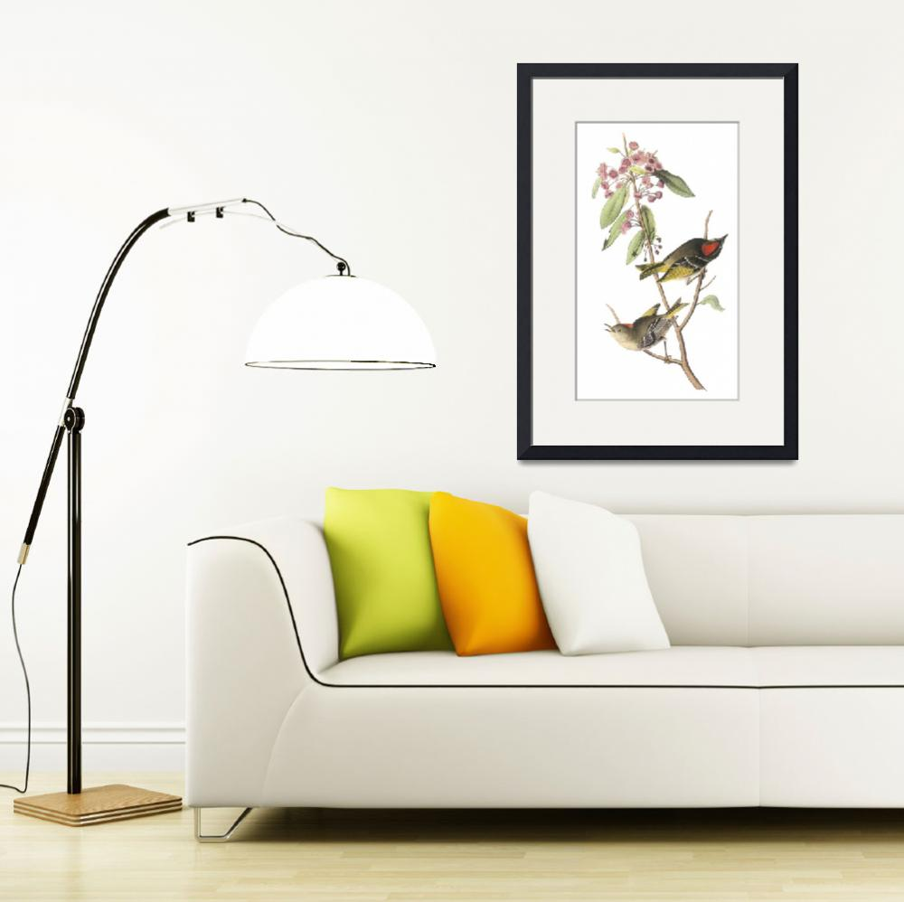 """Ruby-Crowned Kinglet Bird Audubon Print&quot  by ArtLoversOnline"