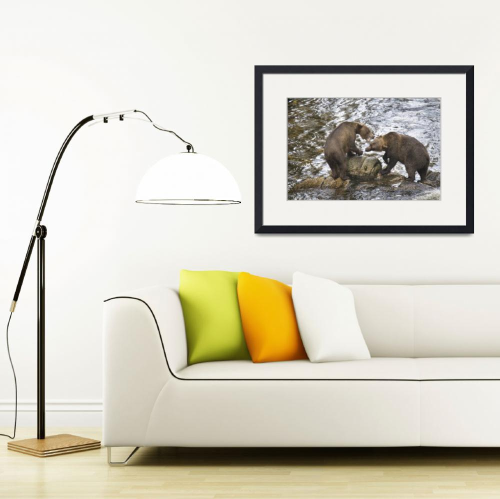 """""""Brown Bears Playfully Wrestle at Anan Creek&quot  (2010) by SederquistPhotography"""