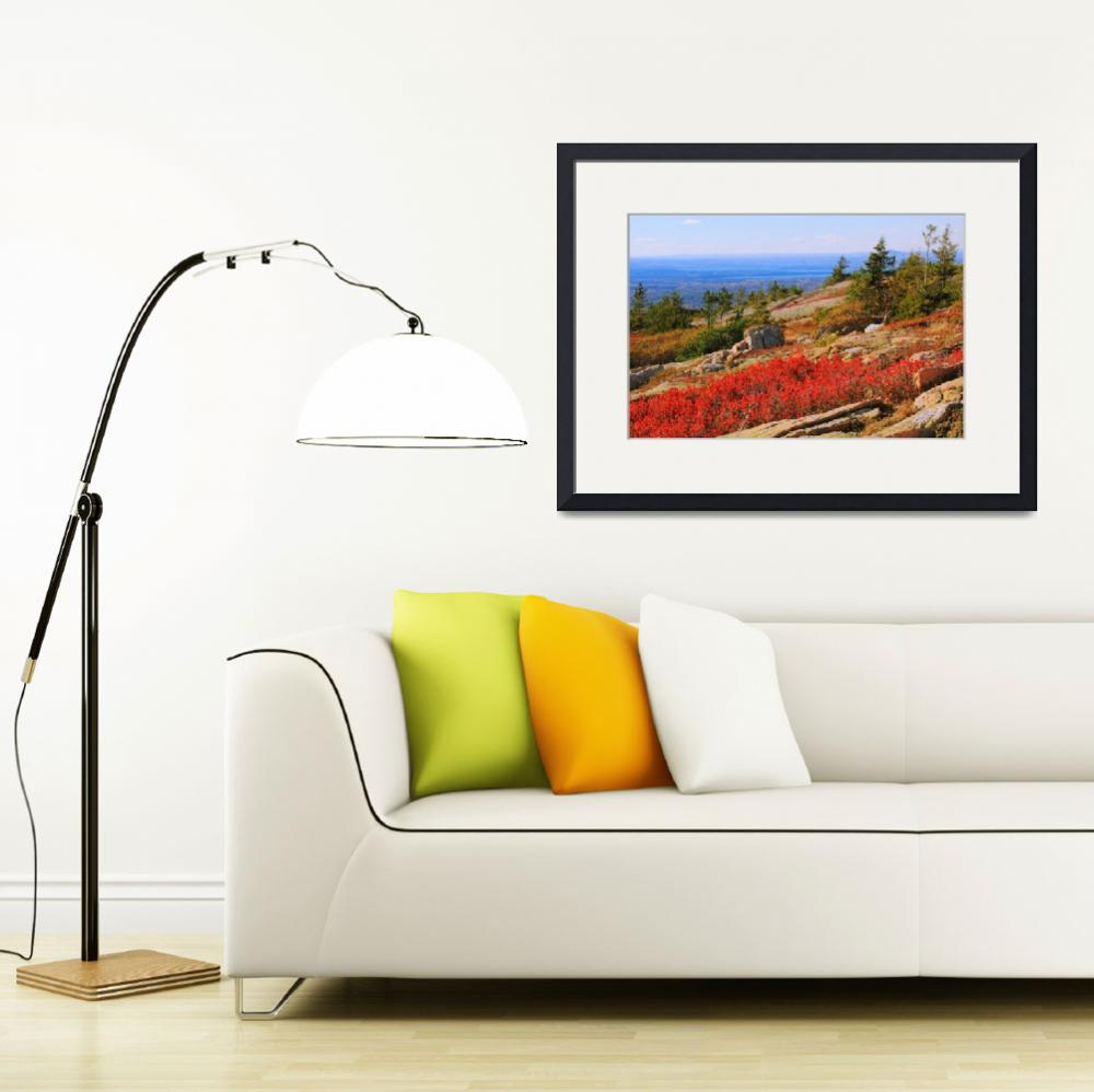 """""""Red Heath on Sargent Mountain, Acadia National Par""""  (2014) by RoupenBaker"""