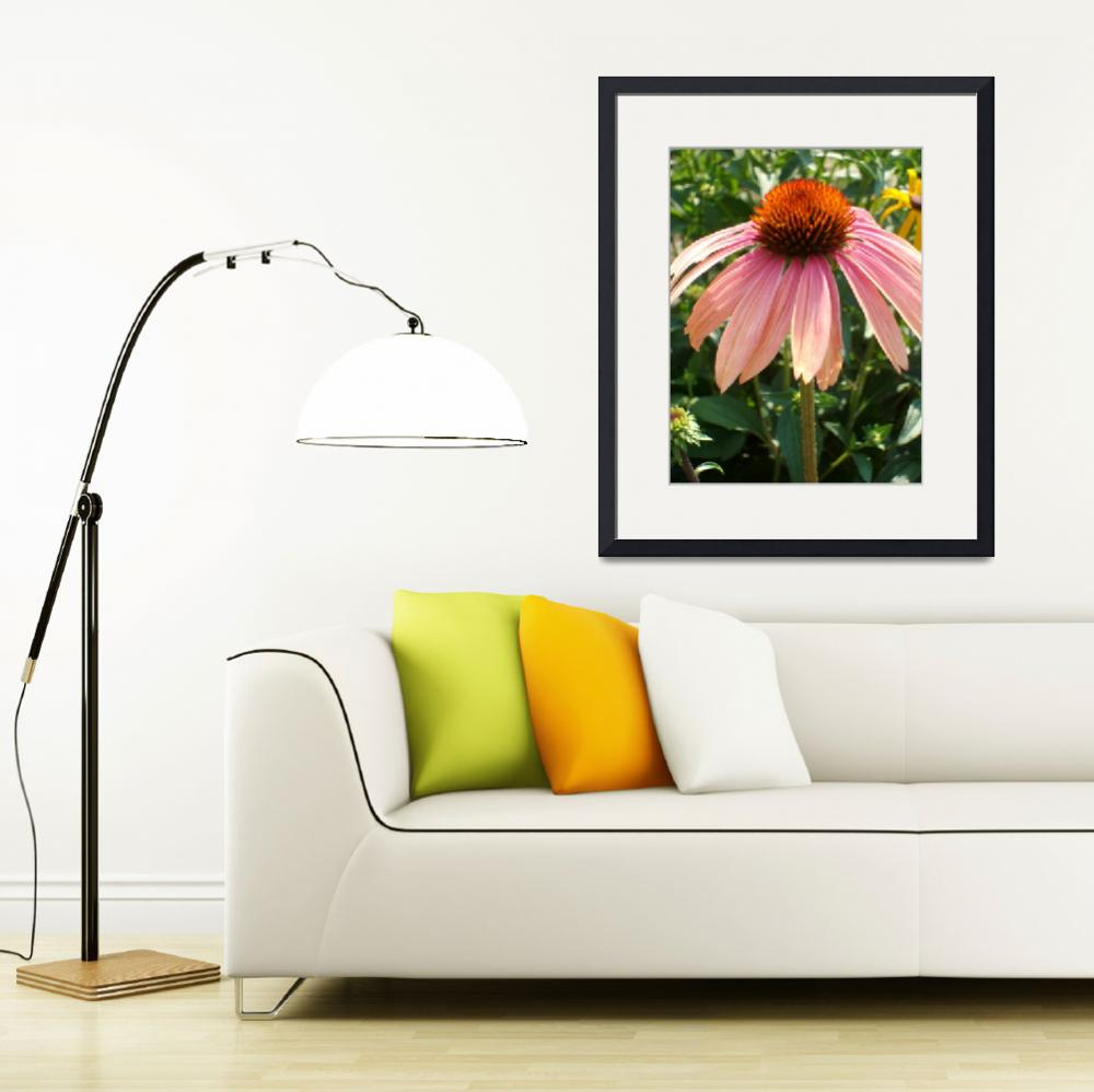 """Echinacea""  (2010) by PuddingStoneAlley"