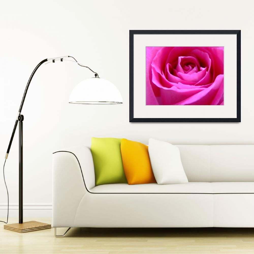 """""""Pink Rose""""  (2009) by Hartphotography"""