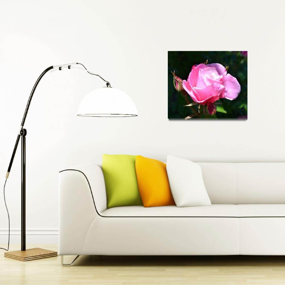 """""""Dramatic Rose""""  (2011) by PatriciaSanders"""