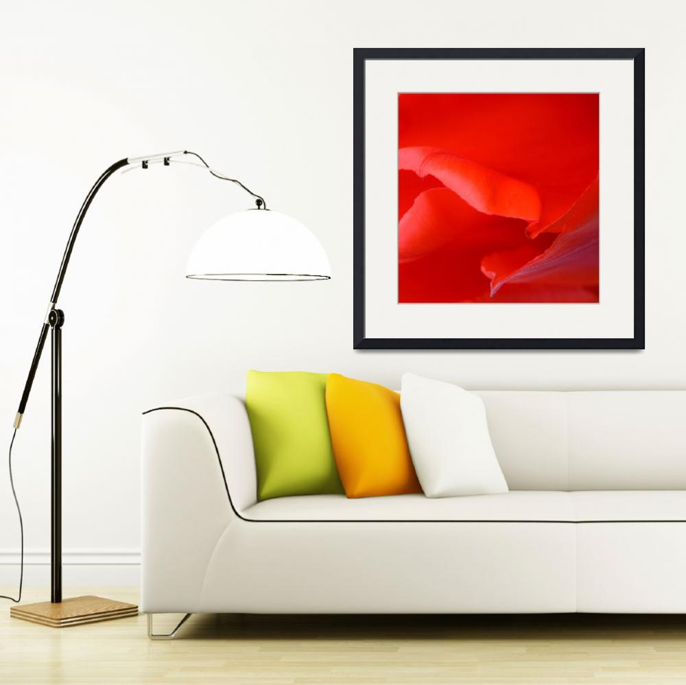"""""""""""Red Tulip 5"""" #5042315.0678 (4)&quot  (2015) by achimkrasenbrinkart"""