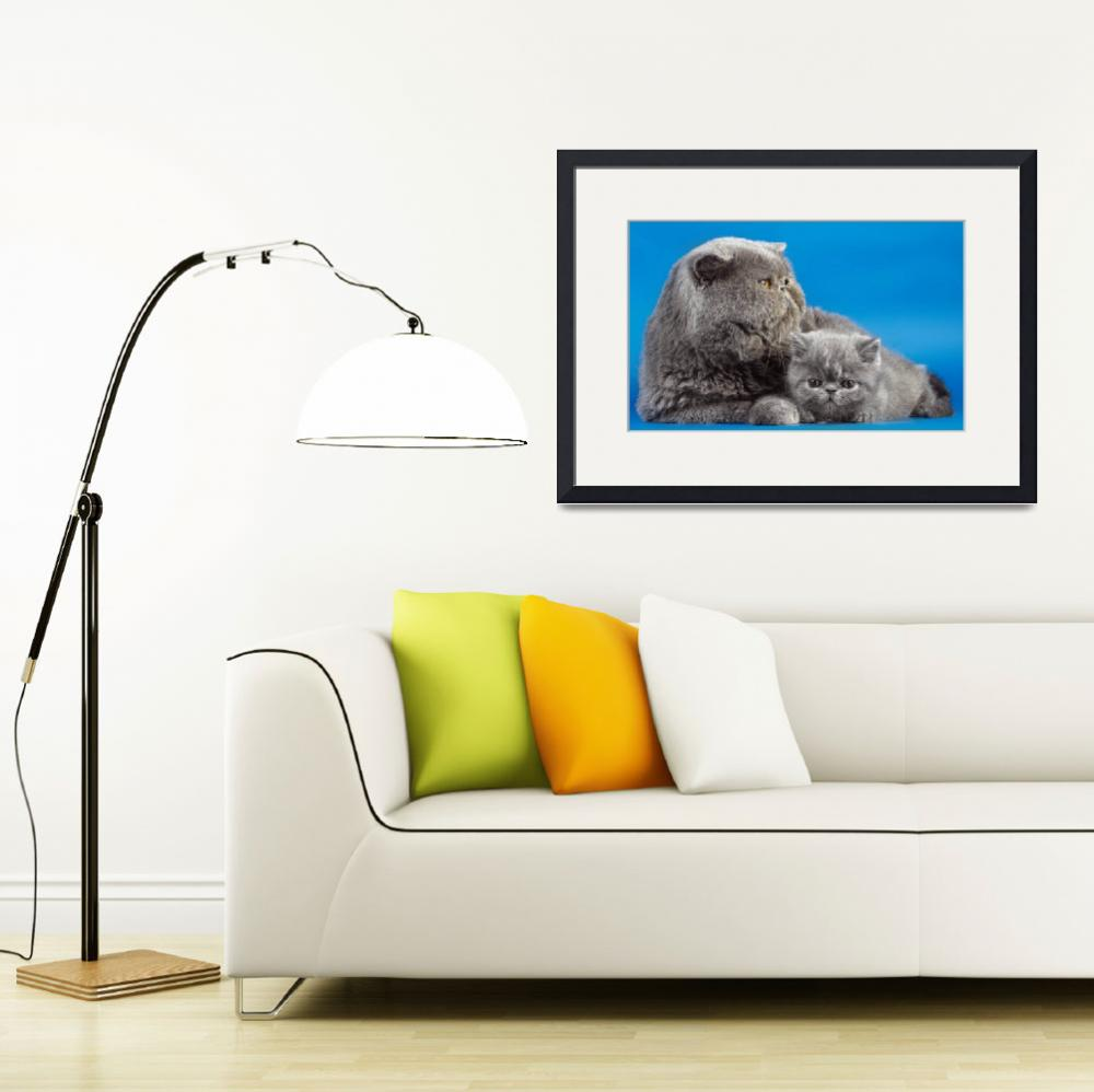 """""""Grey Scottish Fold Mother And Kitten&quot  (2015) by AnswersFound"""