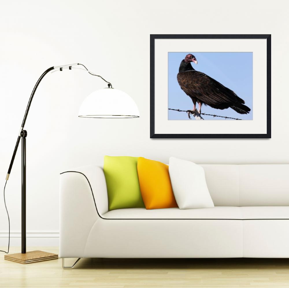 """Turkey Vulture""  by DonBakerPhotography"
