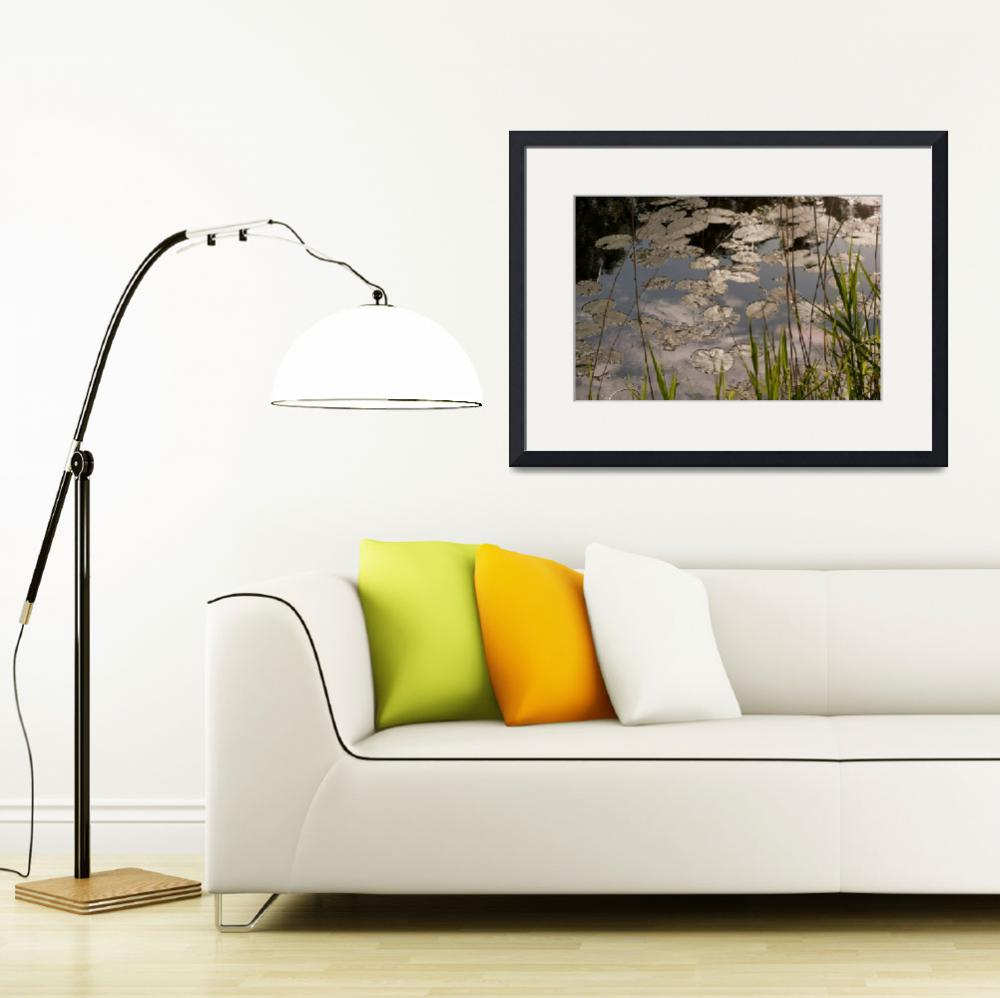 """""""Water Lilies Three""""  (2010) by SederquistPhotography"""