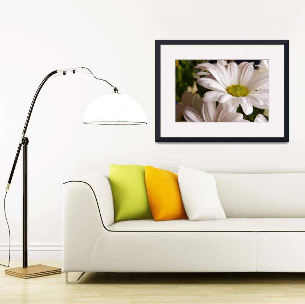 """White Chrysanthemum flower&quot  (2011) by InspiraImage"
